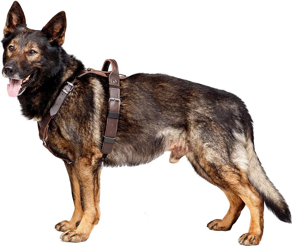 Dingo Gear Company Presidents Harness For Dog Medium